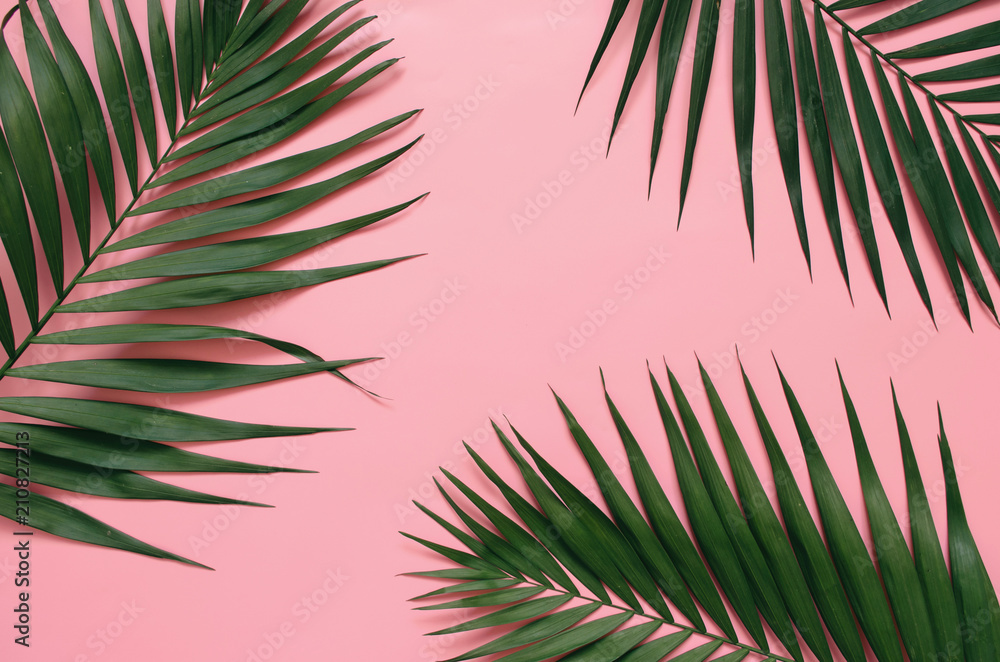 Fototapety, obrazy: Tropical palm leaves on pastel pink background