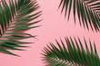 Leinwandbild Motiv Tropical palm leaves on pastel pink background