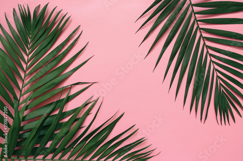 Tropical palm leaves on pastel pink background