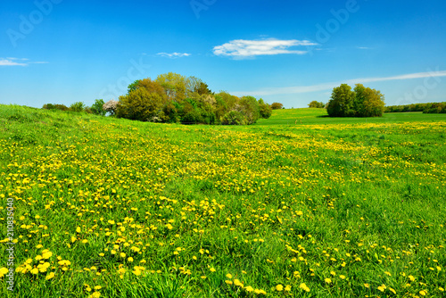 In de dag Weide, Moeras Meadow full of Dandelion Flowers in Spring Landscape under Blue Sky