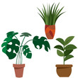 A set of plants in pots for home and office