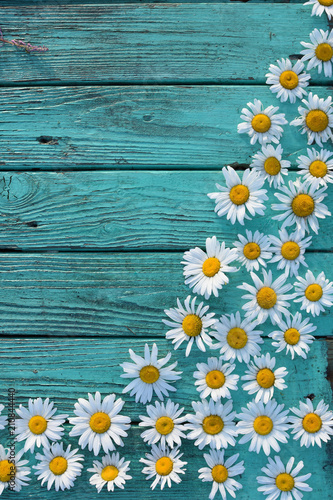 White Daisies Matricaria On A Vintage Antique Turquoise Colored Boards Wallpaper Background For