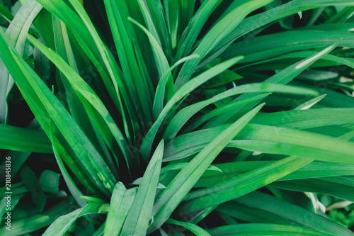 Yard Natural Rustic Background