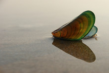Mussel Shell. Green Mussels On...