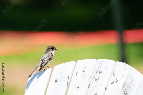 Tuinposter Vogel Bird on a chair