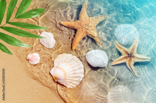 Valokuvatapetti starfish and seashell on the summer beach in sea water.