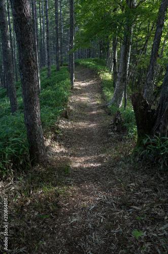 In de dag Weg in bos 森の小道