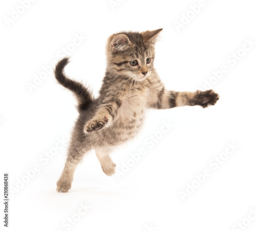 Cute tabby kitten jumping Wallpaper Mural