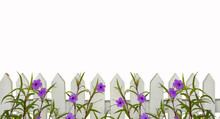 White Picket Fence Border With...