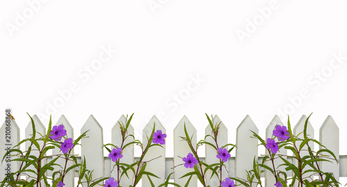 Fotografía White picket fence border with purple flowers border isolated on white with spac