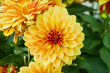 Beautiful Orange And Yellow Ch...