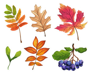 Set of hand painted watercolor leaves, fruits and branches. Isolated objects on white background. Autumn foliage clip art.