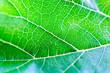 Macro leaf green background , wapaper