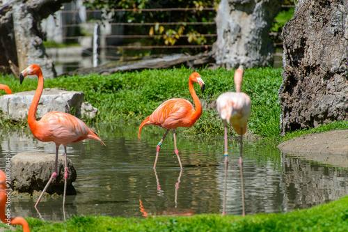 Foto op Aluminium Flamingo Flamingo in the zoo