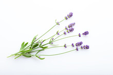 Lavender Flowers On A White Ba...