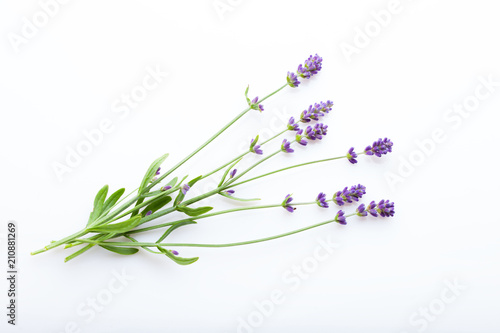 Spoed Foto op Canvas Lavendel Lavender flowers on a white background