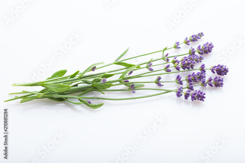 Spoed Fotobehang Lavendel Lavender flowers on a white background