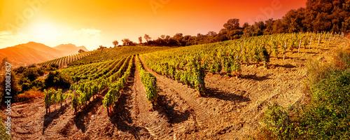 Photo sur Aluminium Vignoble Sunrise on a hillside vineyard in Sardinia