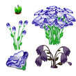The life stages of flowers eustoma purple isolated on white background. Vector cartoon close-up illustration.