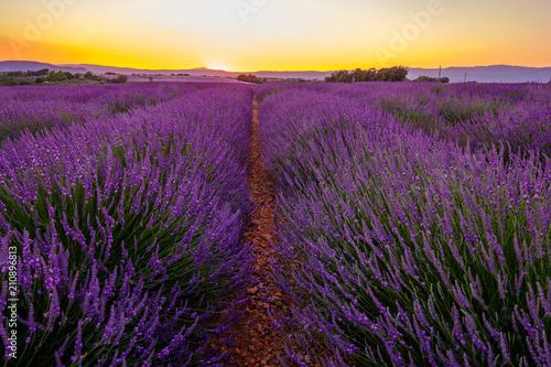 Tuinposter Lavendel Champ de lavande sur le Plateu de Valensole, Provence, France. Coucher de soleil.
