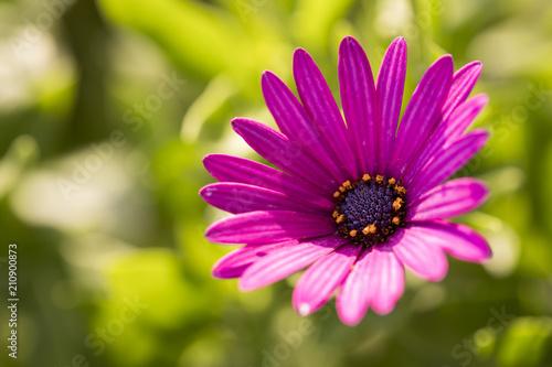 Foto op Canvas Bloemen Flower