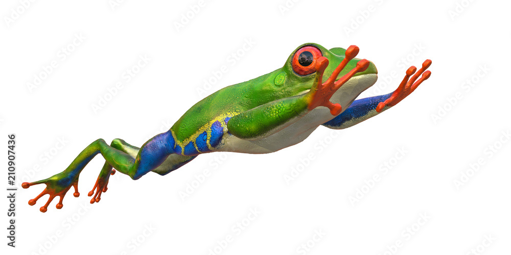 amazon frog in a white background