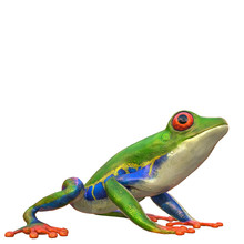 Amazon Frog In A White Backgro...