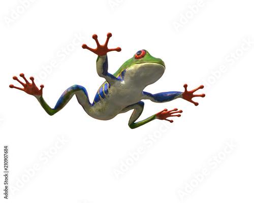Fototapeta amazon frog in a white background