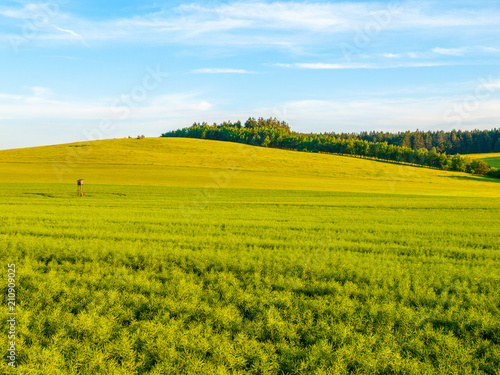 Foto op Aluminium Heuvel Green field panorama landscape. Panoramic view in the spring evening.