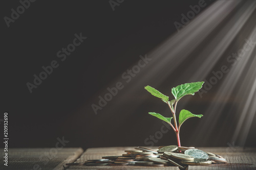 Fotografía  Coins and plant growing through it