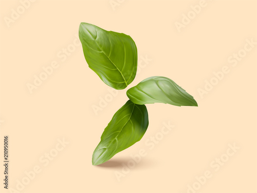 Stampa su Tela Fresh green basil leaves