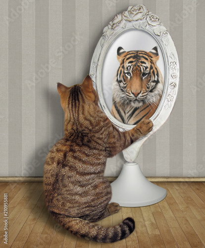 The cat sits near the mirror and looks at his unusual reflection in the room Canvas Print