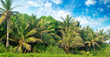 Tropical palms on the sandy beach . Wide photo.