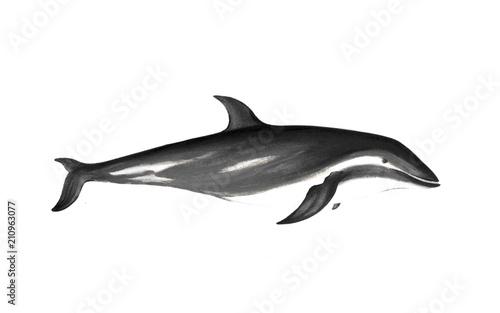 Foto op Aluminium Dolfijn illustration of animal