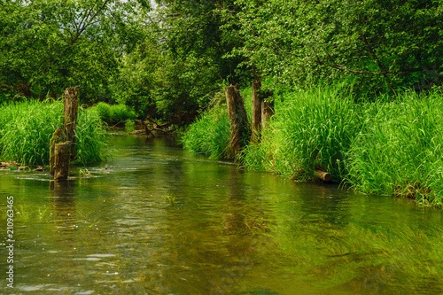 Poster Rivier Forest river in summer