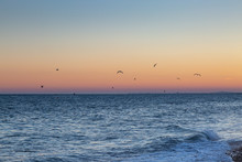 Seagulls In Flight At Sunset, Over The Sea At Brighton