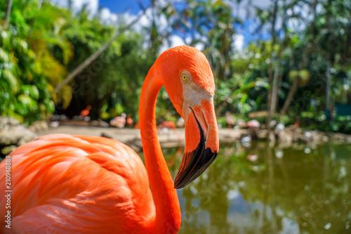 Foto op Aluminium Flamingo Pink flamingos against blurred background