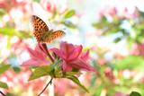 Fototapeta Natura - Schmetterling 478