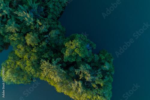 Fotografie, Obraz  Árvores dentro da lagoa da Barra da Tijuca - Rio de Janeiro