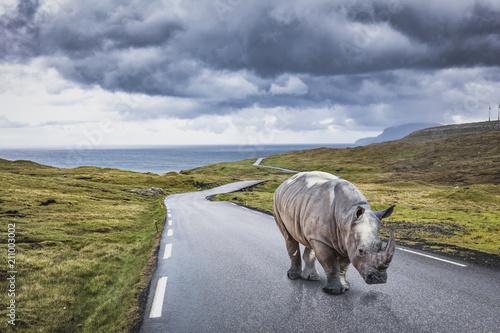 rhinoceros on lonely road