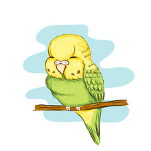 Sleeping Baby Parrot Illustration For Poster, Printing Of Textiles Or Pajama, Web Site, Bedroom Wallpaper. For Pet Shop, Exhibition, Event For Children