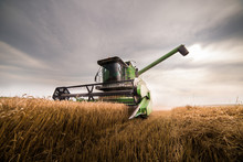 Harvesting Of Wheat Field With...