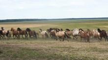 Horses Running Around The Field