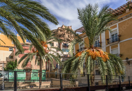 Aluminium Prints Brazil The hill with the Santa Barbara castle of alicante, visible among the palm leaves of a square. Spain