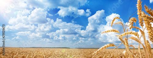 Summer Landscape of Golden Wheat Field Fototapete