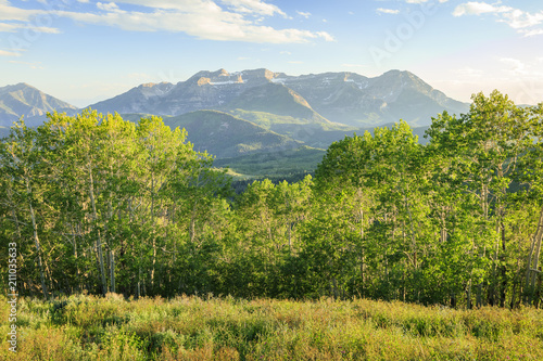 Foto op Plexiglas Blauwe hemel Green aspens in the Wasatch Mountains, Utah, USA.