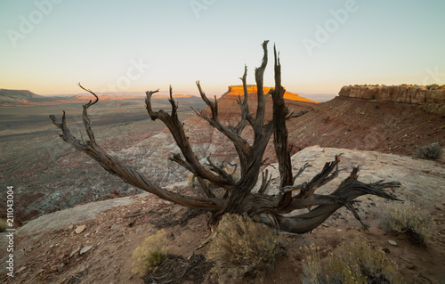 The first rays of early morning light paint the top western tip of Gooseberry Mesa in Southern Utah which is framed by the branches of a dead tree on the southern rim.