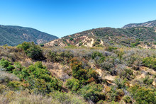 Heavy Brush From Late Spring Rain Begins To Dry In Southern California Forest Along Hiking Trails