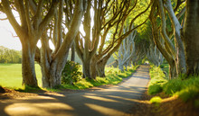The Dark Hedges, An Avenue Of ...