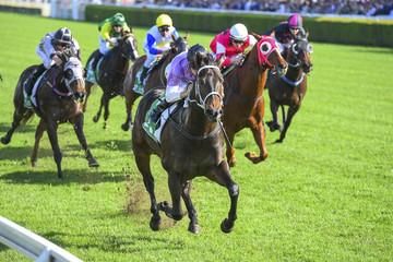 horse racing on turf